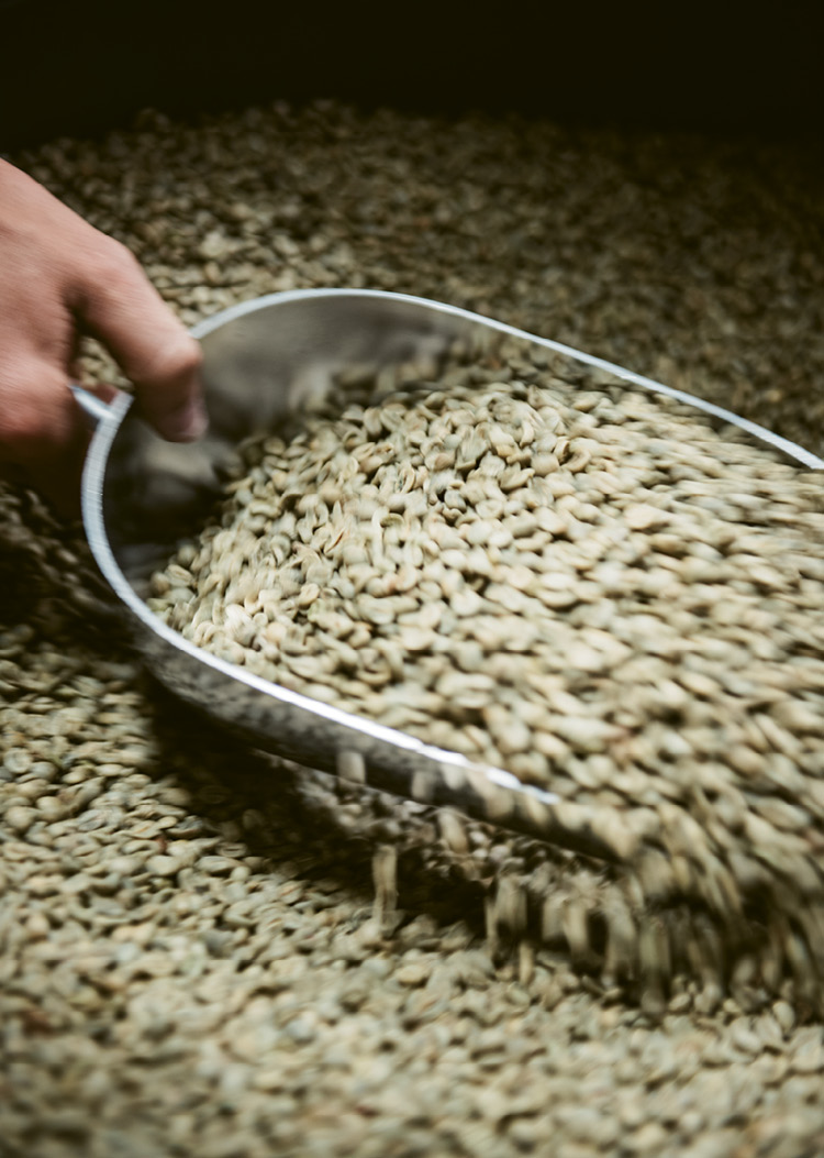 Green (unroasted) beans