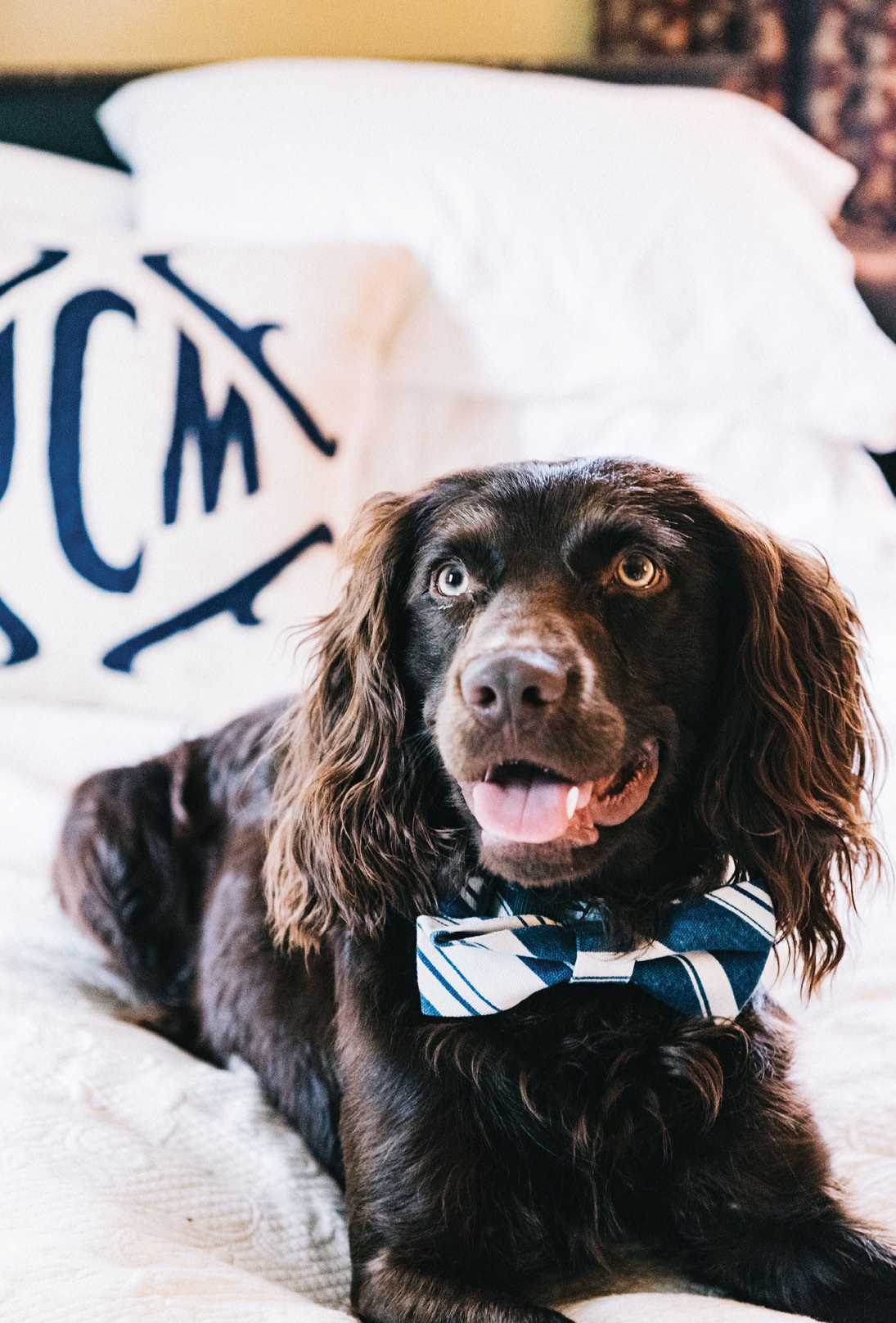 "posh pup The Viscount Gabriel Cipriani of Windermere (aka ""Cips"") awaits his debut: ""Know how your guests feel about pets; if any are wary, perhaps introduce your dog on a leash or send him out for a playdate,"" advises Mitchell"