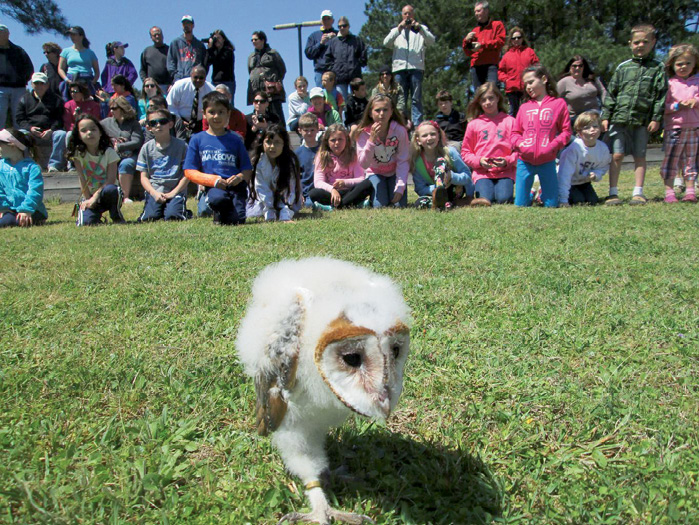 3. A barn owl after a flight demonstration at the Center for Birds of Prey