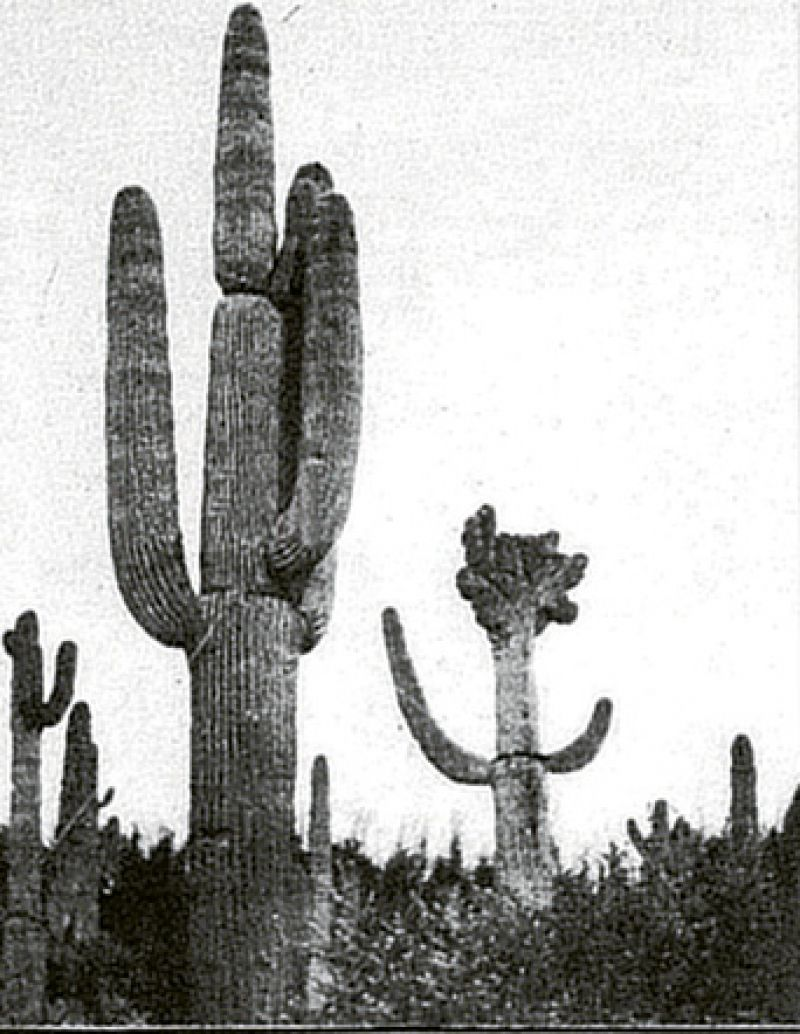1932: After spending the summer abroad, Victor came to town on September 27 to inspect his cactus garden. They wouldn't open Fenwick Hall for the season until February.