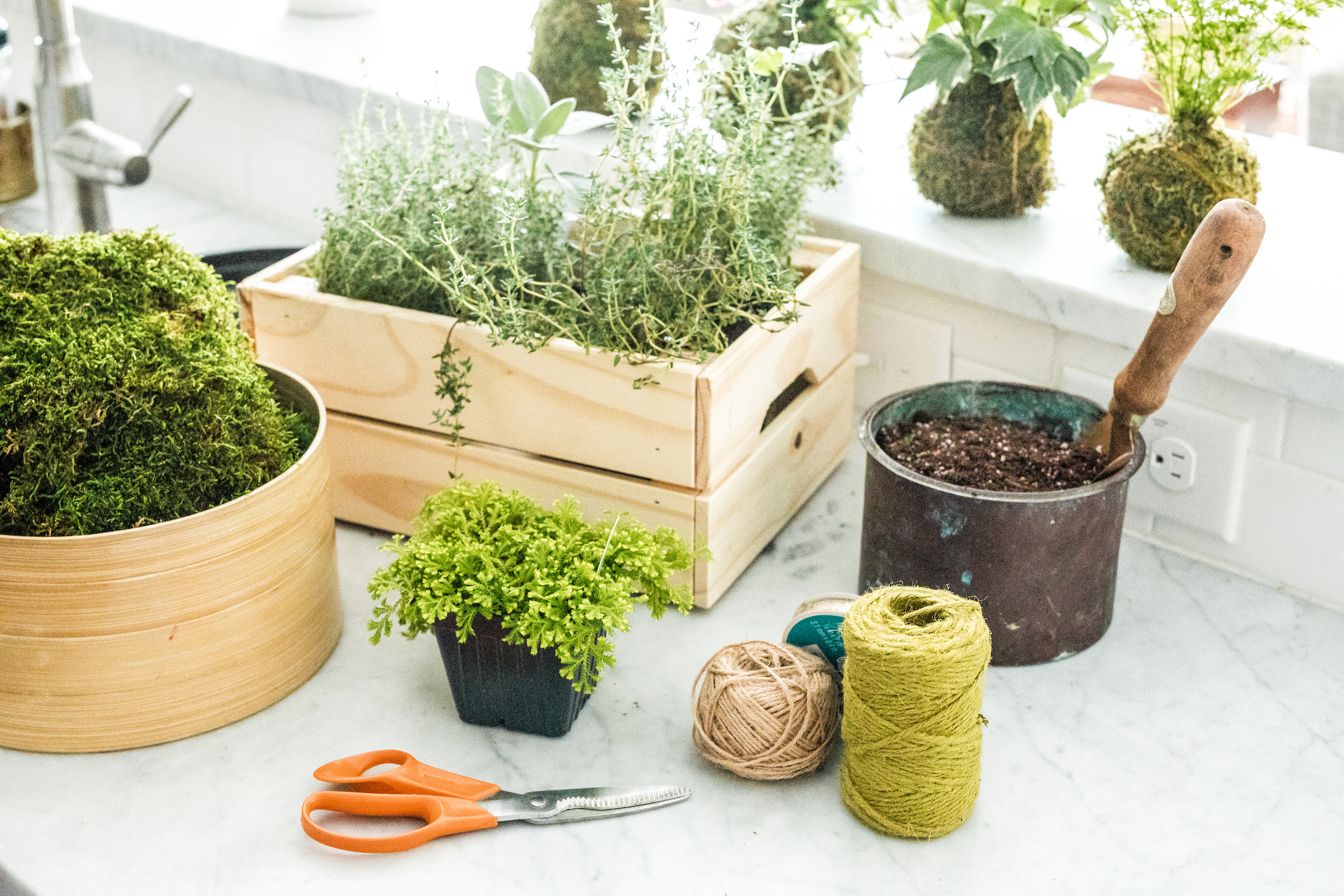 Prepare your workstation, wearing gloves to protect your hands from dye in the moss. Soak a sheet of moss (shown in container at far left) in a container of water until it is damp.