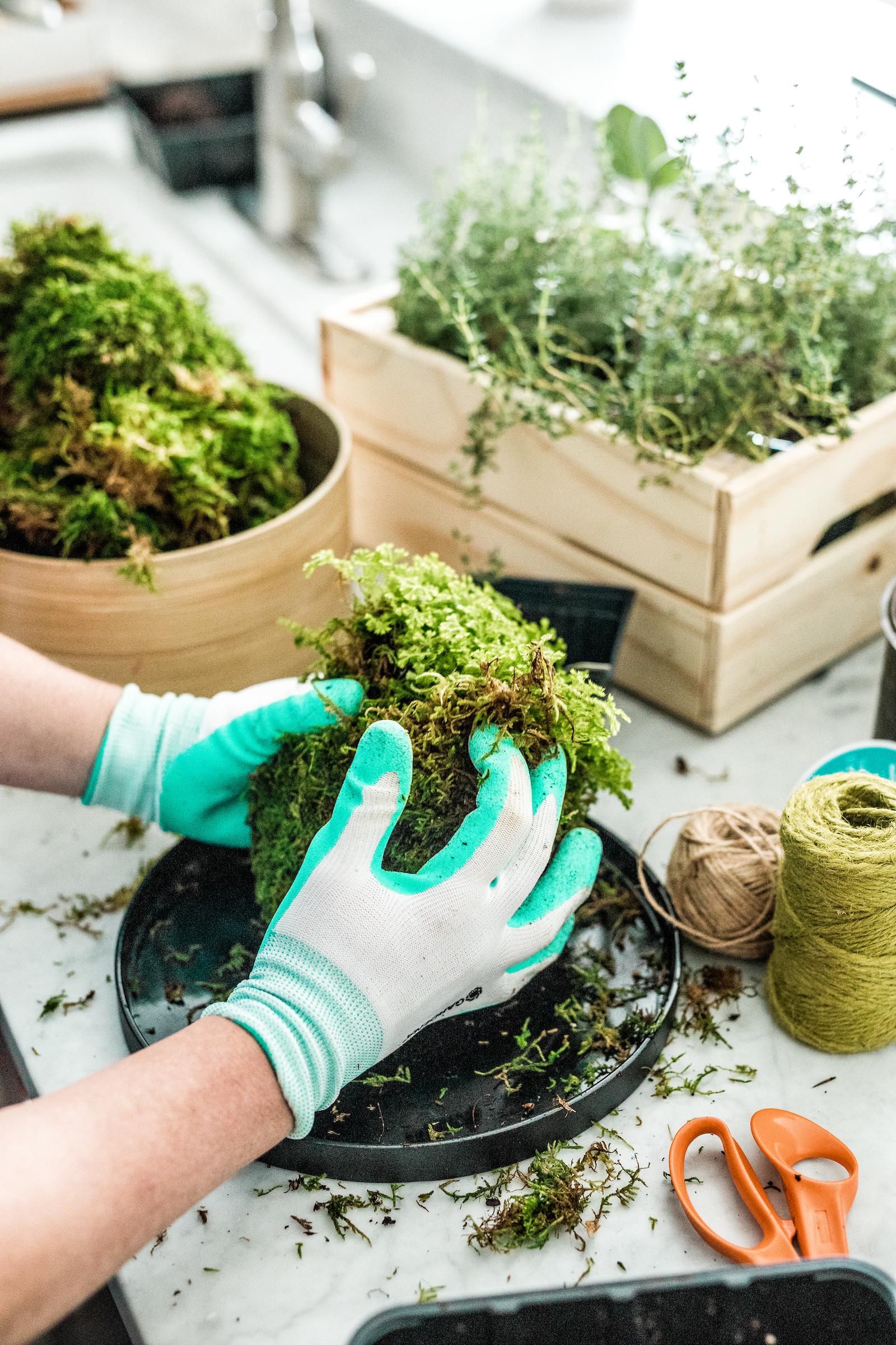 Wrap moss around the soil sphere.