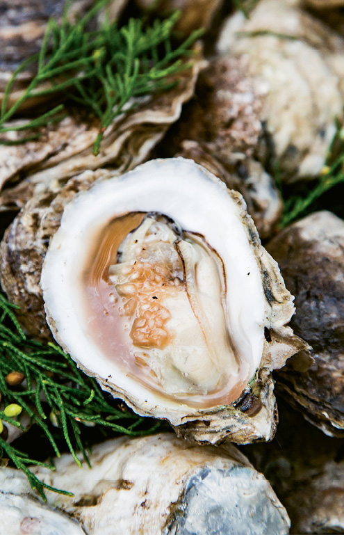 Roasted oysters with a hint of juniper.