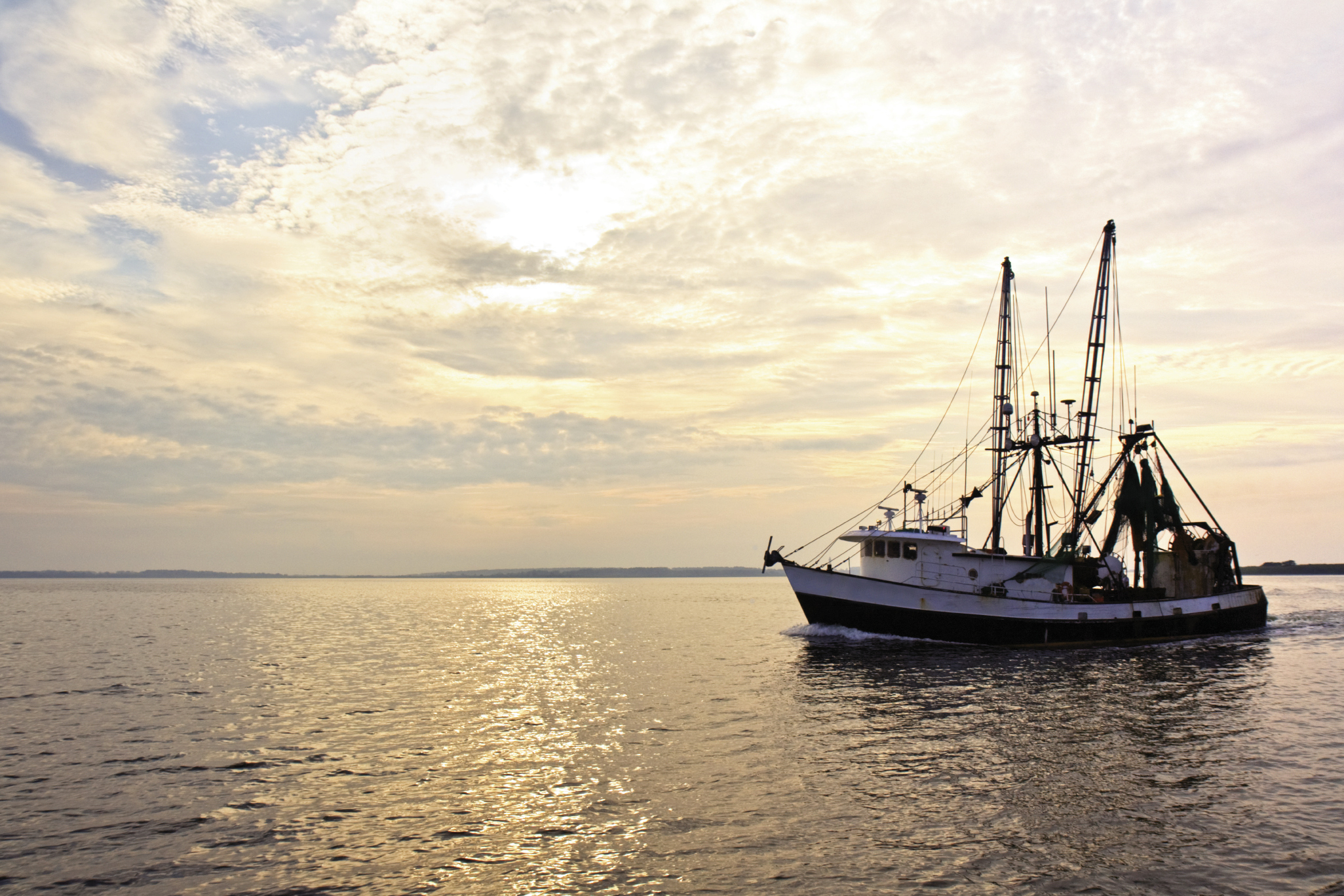 Local Shrimpers