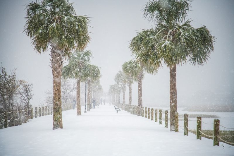 <strong>Pitt Street Bridge:</strong> The surreal beauty of palms covered in snow; <em>photograph byNicholas Skylar Holzworth</em>
