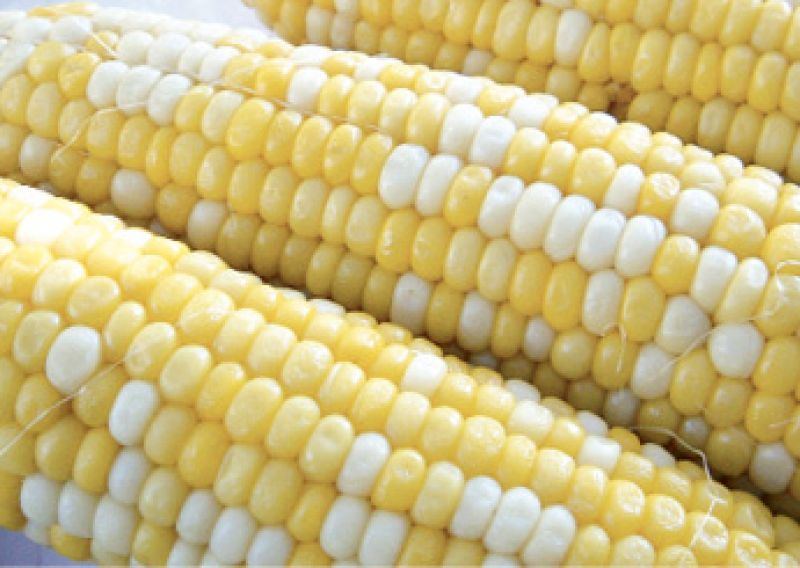 "Corn Pick: ""'Peaches and Cream'; it has the sweetest flavor on the market."""