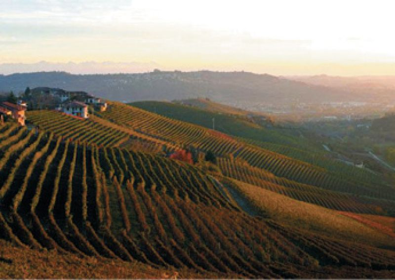 """Best in Glass:  """"I once visited Giuseppe Rinaldi's vineyard in Italy and had some of the most mind-bending wine ever."""""""